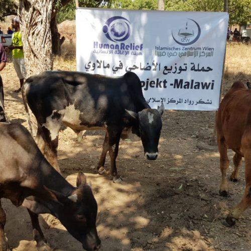 Qurban in Malawi