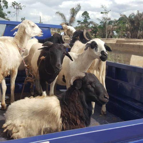 Qurban in Nigeria