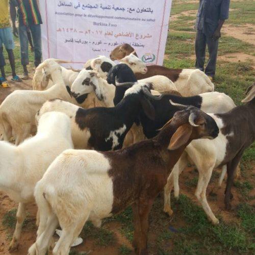 Qurban in Burkina Faso